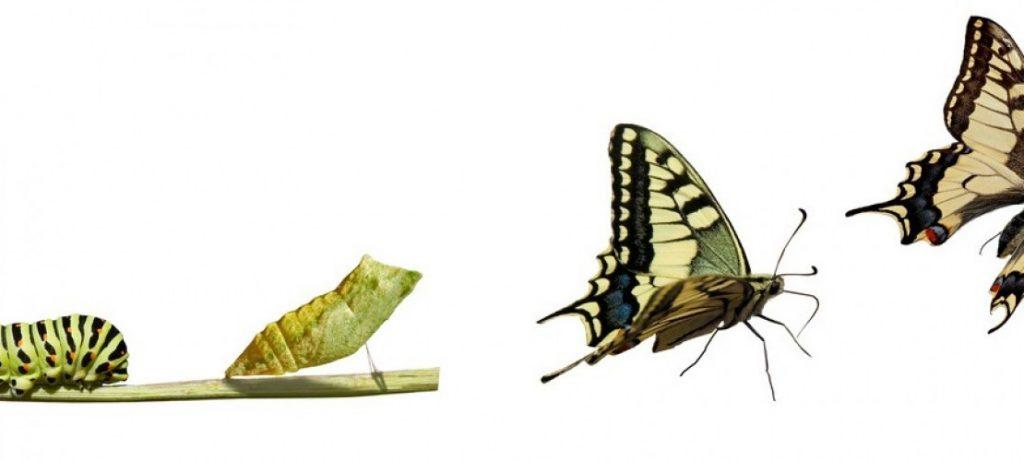 Os 5 Passos – A Escada – para a Transformação - Metamorfose - Samuel Costa